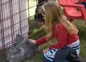 girl_petting_rabbit