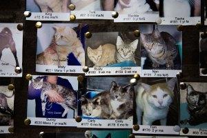 cats, kitty cats